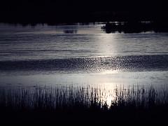 Aves, laguna, sol y amigos (__Blanca__) Tags: amigos sol atardecer sigma olympus laguna quedada 70200mm palencia tierradecampos lagunadelanava fuentesdenava e620 mardecampos objetivoanalgico