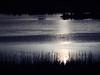 Aves, laguna, sol y amigos (__Blanca__) Tags: amigos sol atardecer sigma olympus laguna quedada 70200mm palencia tierradecampos lagunadelanava fuentesdenava e620 mardecampos objetivoanalógico