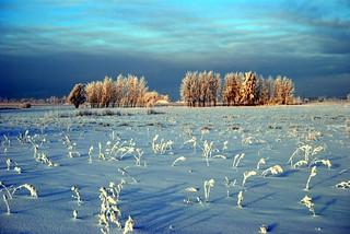 Wild is the Winter