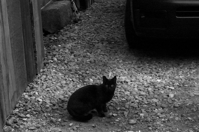 Today's Cat@2010-12-30