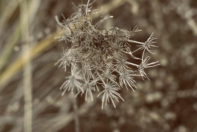 More weeds! :D