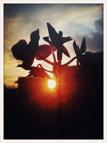 Orchids & sunset