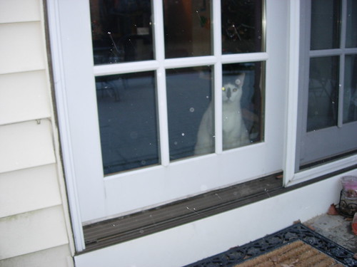 Cat wants out