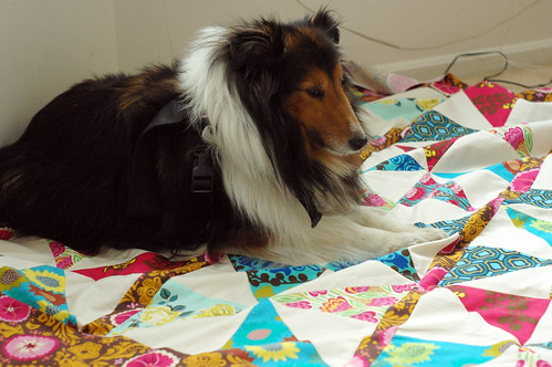 pinwheels and sheltie