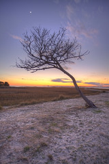 "Out of place tree... (""JT"" Taylor) Tags: ocean longexposure sunset sky beach water clouds canon eos coast nc northcarolina atlantic carolina 1740 ftfisher kurebeach 5dmarkii"