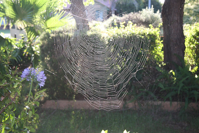 Spiderweb in the afternoon.