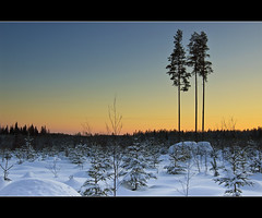 The lucky ones (Barry_Madden) Tags: trees winter sunset sky sun snow cold field forest suomi finland landscape countryside afternoon freezing explore talvi lappeenranta