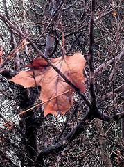 20110116 Leaf