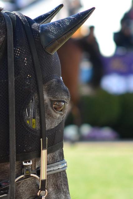 生き馬の目の鏡像