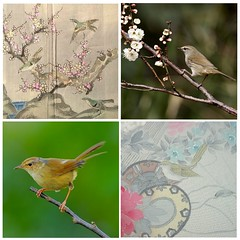 Uguisu  - Japanese Bush Warbler (Japanese Nightingale) (Satomi Grim) Tags: bird motif season kimono kitsuke japanesebushwarbler japanesenightingale  uguisu
