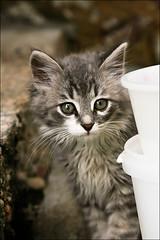 Navahrudak: cat