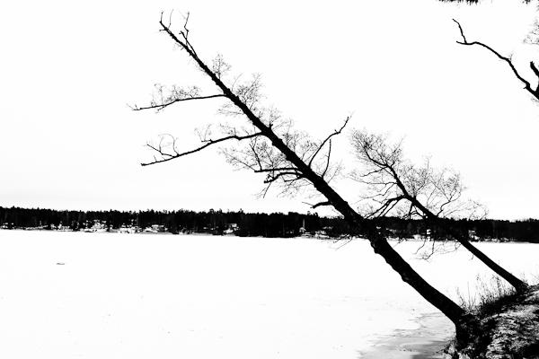 20110121_#01 Vinter lutande träd Sundbyholm