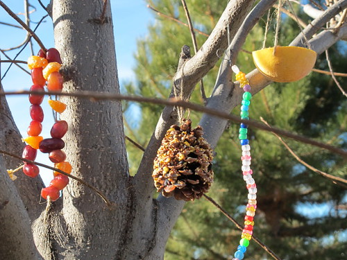 Some of our homemade bird feeders