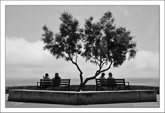 (Marjo1963) Tags: sea tree bench spain sitting zee boom mallorca bankjes calamillor flickrsbest 052011