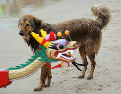 HK - Dog & Dragon Boat (BirdMission) Tags: dog dragonboat lammaisland