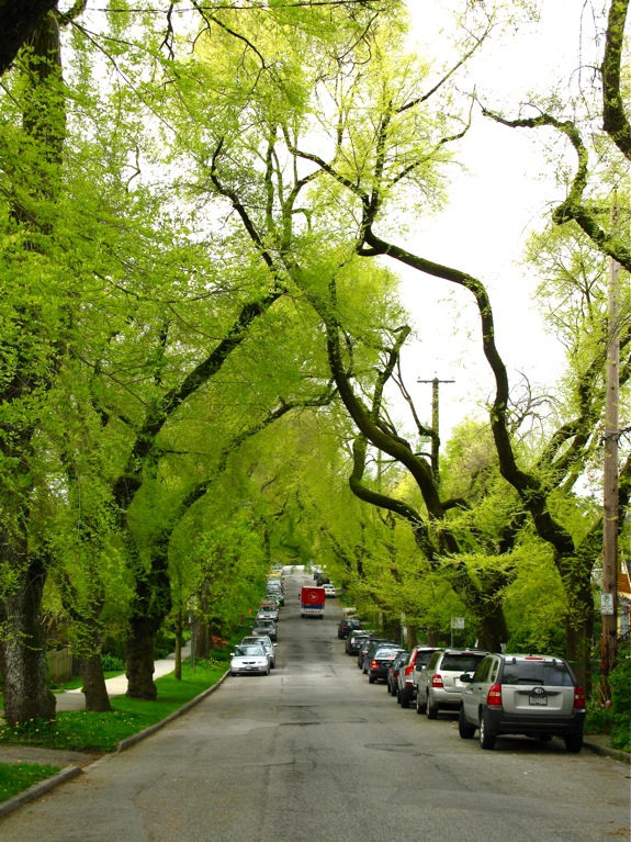 green trees street vancouver spring