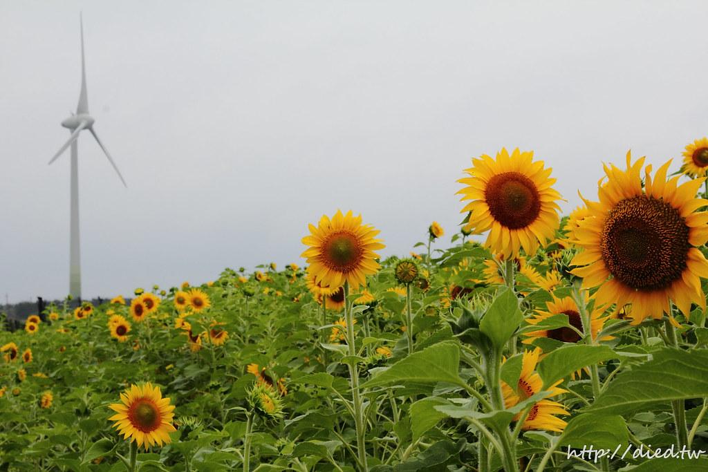 向日葵 風力發電機