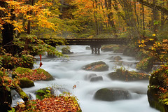 Mid-fall stream (Fred Lin) Tags: fall autumn foliage bridge woodenbridge longexposure stream water japan aomori oirasestream oirase