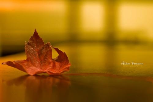 13/365: Leaf