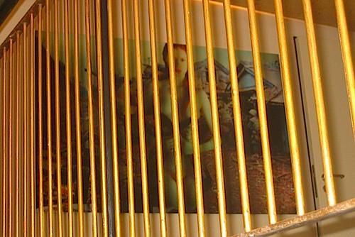 2010/11 art steinerwirt 037