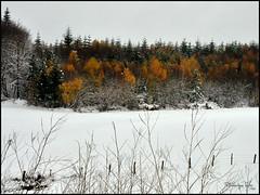 Automne ou Hiver? (TeF46) Tags: france automne hiver neige fort auvergne feuille cantal d5000 frdriquetezier