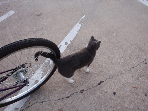 Cat and Bike