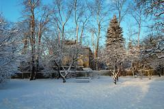 Do you see the bird? (Alex of Gothenburg) Tags: winter gteborg sweden gothenburg swow