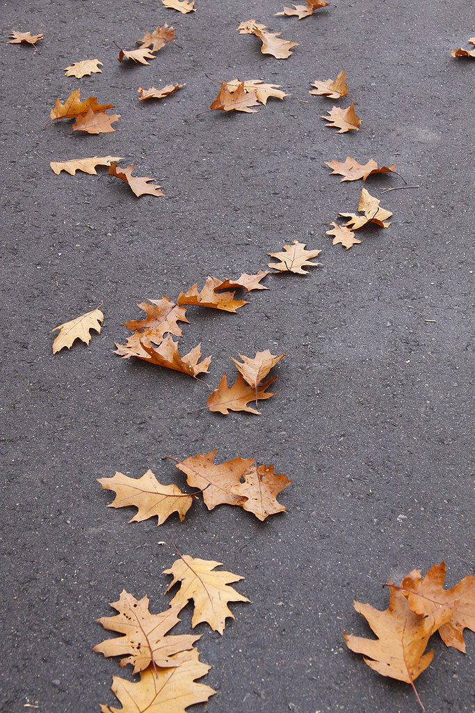 scattered oak leaves