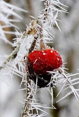 Magic frost 16 (Gerald Paetzer) Tags: schnee winter snow macro ice nature leaves forest landscape frost jahreszeiten natur makro eis wald bltter moods stimmung winterzauber ostwestfalen potofgold naturesfinest coth supershot eisimpressionen