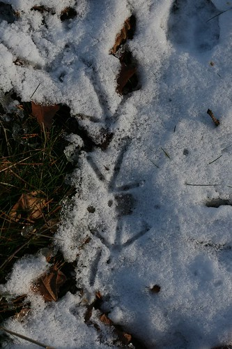 Whose footprints?