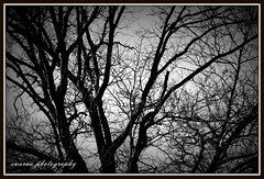 Winter black and white (Swarna Rajan Photography) Tags: autumn winter blackandwhite snow fall ice canon snowstorm icestorm blizzard