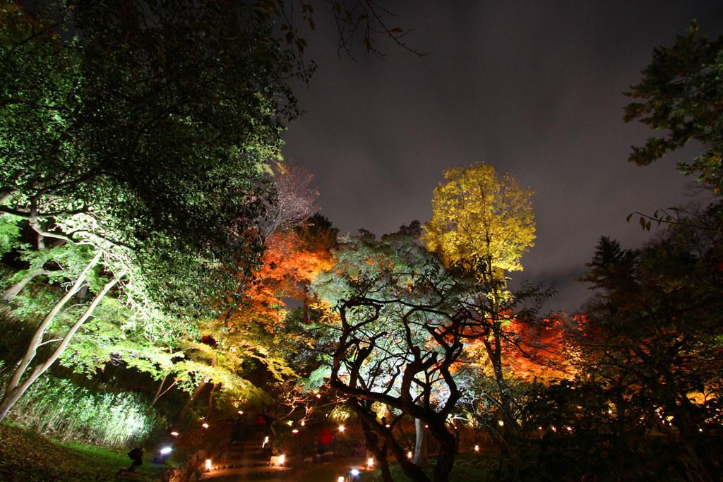 Kitanotenmangu Red Leaf Lightup 2010 (11)
