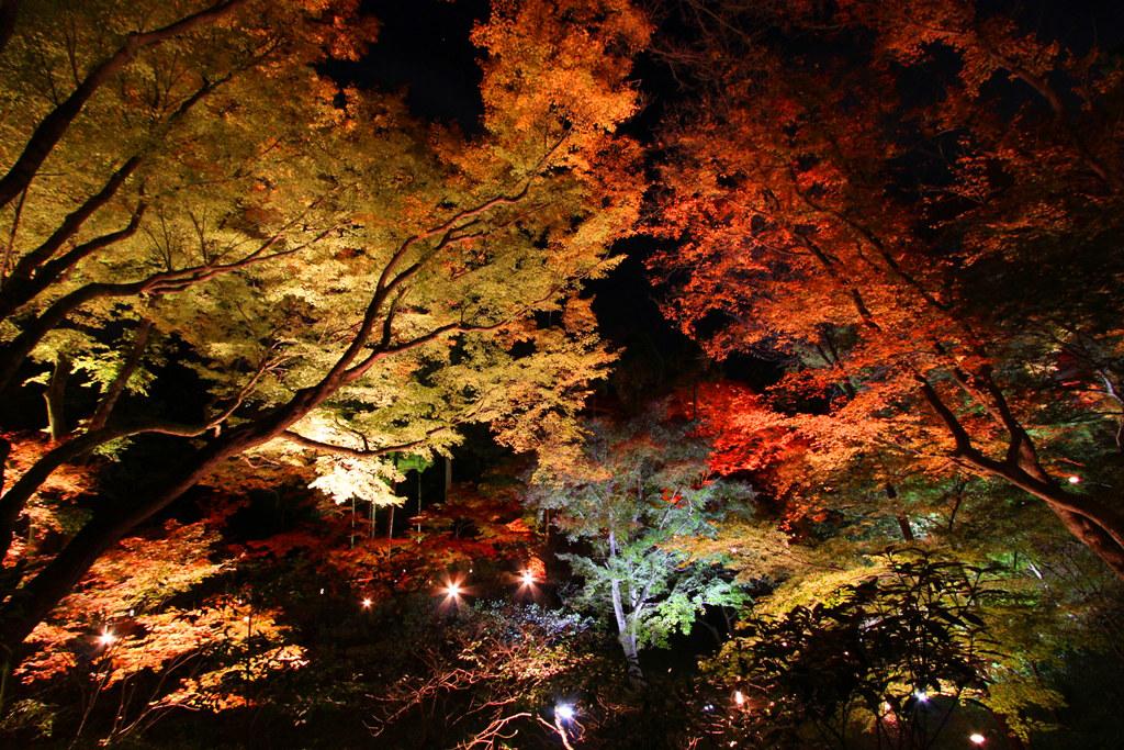 Kitanotenmangu Red Leaf Lightup 2010 (12)