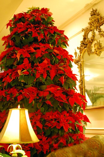 PoinsettiaTree & Mirror