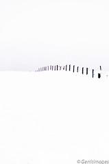 Winter moments (gerritdevinck) Tags: winter snow nature forest landscape zwartwit sneeuw natuur landschap
