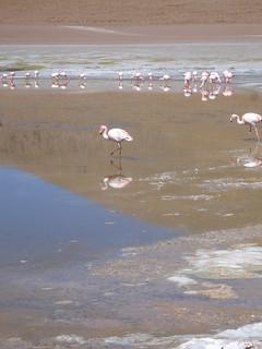 Sud Lipez , Lagunas coloradas