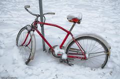 Snowbound - Ottawa 12 10 (Mikey G Ottawa) Tags: street schnee winter snow ontario canada bike bicycle hiver ottawa neige velo ccm fahrad mikeygottawa