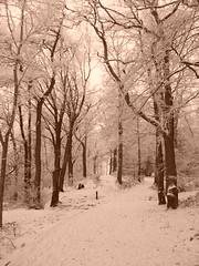 Sepia Woods (stuartpaterson) Tags: park city uk greatbritain mist snow castle ice water fog scotland boat town scenery frost ship unitedkingdom britain snowy scenic royal scottish scot gb civic rowboat british loch icy lomond steamer brit balloch lochlomond cameronhouse silohette wintersun wintery luss secnic maidoftheloch icesheet lowwintersun cameronhousehotel scotlandwintersnow