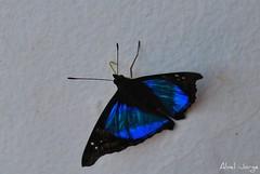 IGUAZU 1446 (Abel + 800k) Tags: naturaleza argentina fauna flora cataratas iguazu misiones