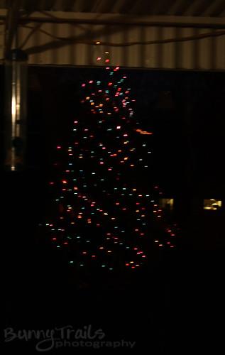 360-tree reflection