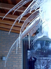 Ice Ice Baby (Rick & Bart) Tags: winter cold ice home frost thuis kou ijs vriezen botg rickbart rickvink