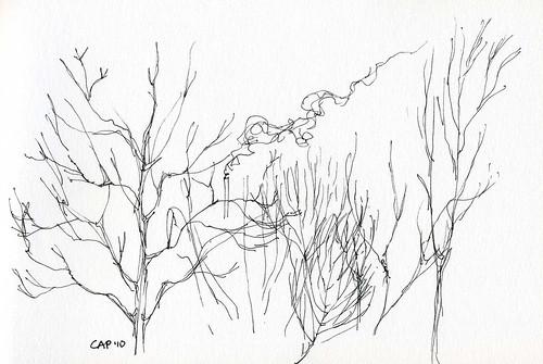 12-28-10, Scruffy Trees 2
