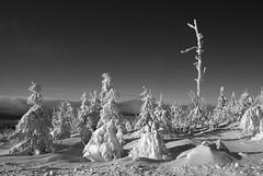 IMGP2580 (kly420) Tags: desktop schnee winter wallpaper bw white black landscape scenery background eis landschaft schwarz erzgebirge weis hory oberwiesenthal fichtelberg krun oberwiesenthal2010 kly420