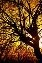 Darlington Sunset (Pragmatic1111) Tags: sunset orange tree yellow evening starburst flickraward platinumheartaward nikonflickraward flickraward5