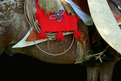 Salteño (Eduardo Amorim) Tags: horses horse southamerica argentina caballo cheval caballos lazo cavalos pferde poncho cavalli cavallo gauchos pferd pampa riendas pala apero chevaux gaucho américadosul carona gaúcho campero amériquedusud provinciadebuenosaires recado gaúchos sudamérica sanantoniodeareco suramérica américadelsur areco südamerika pilchas norteños tientos pilchasgauchas recao pampaargentina camperos americadelsud americameridionale campeiros guardamonte campeiro guardamontes eduardoamorim peruvianhorse salteños peruvianhorses peruvianpasohorses peruvianpasohorse cojinillo caballodepasoperuano peyones pampaargentino asidera caballosdepasoperuano cavalosdepasoperuano chevauxpasopéruvien cavalodepasoperuano chevalpasopéruvien peleros sobrepeyón