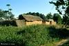 Afgoi, Somalia (aikassim) Tags: farm huts agriculture somalia hornofafrica eastafrica papayatree مزرعة afgooye الصومال afgoi shebeelahahoose
