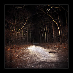 Dead end (kikikentucky) Tags: tree forest dark path spooky mysterious horror scarry