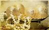 Gold and Beads (snolic...linda) Tags: coffeeshopaction kimklassentexture kimklassenactionsvideo