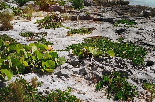 Beach greens