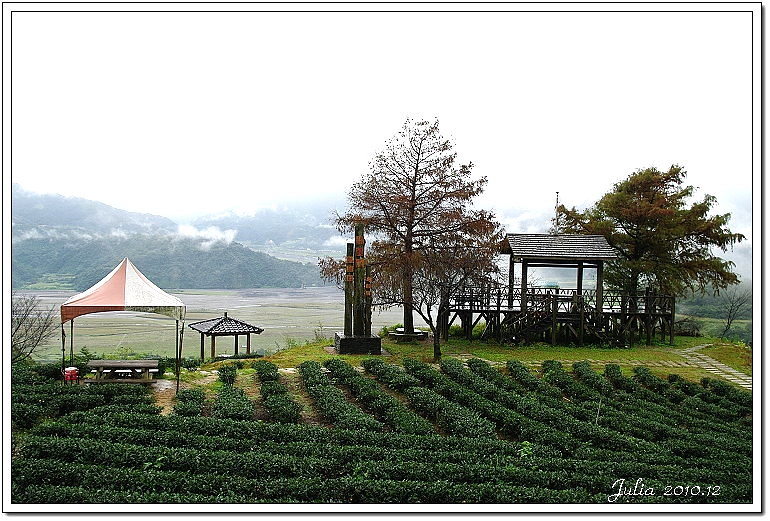 玉蘭茶園 (7)